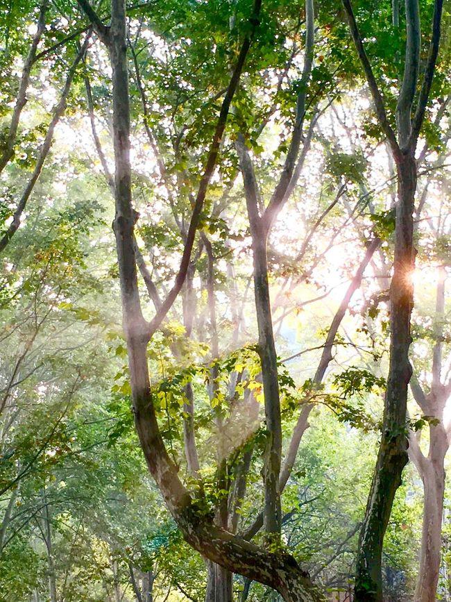 The light saying Good morning to everybody --the nature's greeting早晨的阳光仿佛自然在给每个人说:早安! Tree Nature Beauty In Nature Green Color C-Dragon 校园 University Zhengzhou,china