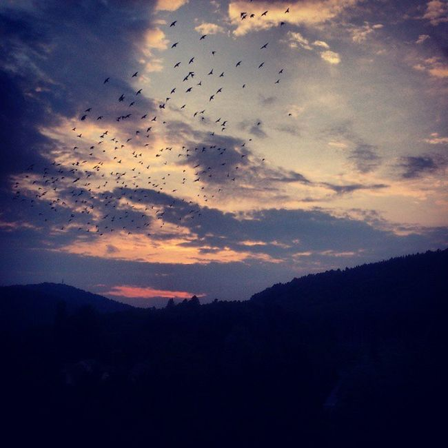""""""" La vie se vit d'essais et d'erreurs. Toutes les relations ne sont pas destinées à fonctionner, certaines sont destinées à t'apprendre quelque chose"""" Landscape Summer Bird Endofholidays"""