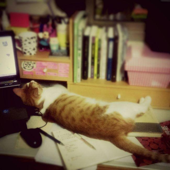 Freelance Life Cat 咪咪貓貓Crazy cat, Crazy me. 🐈&😱 終究是結束了,無關情緒太多,讓自己成長是真實的。謝謝你們的故步自封與讓我增廣見聞,使我在發表會上好好伸展自我與成長。
