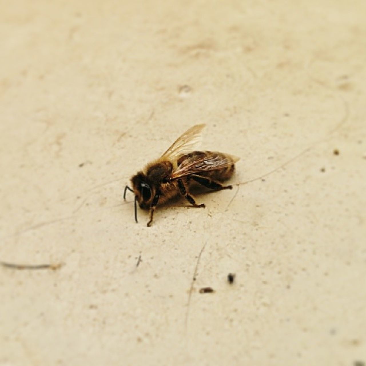 one animal, insect, animal themes, animals in the wild, wildlife, no people, day, outdoors, close-up, nature