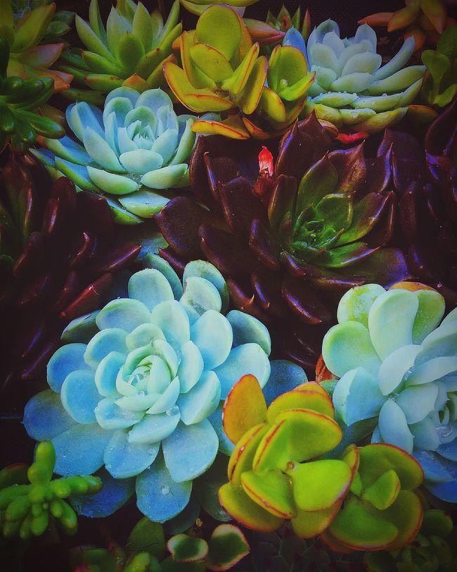 Succulents set😊 Green Flowers