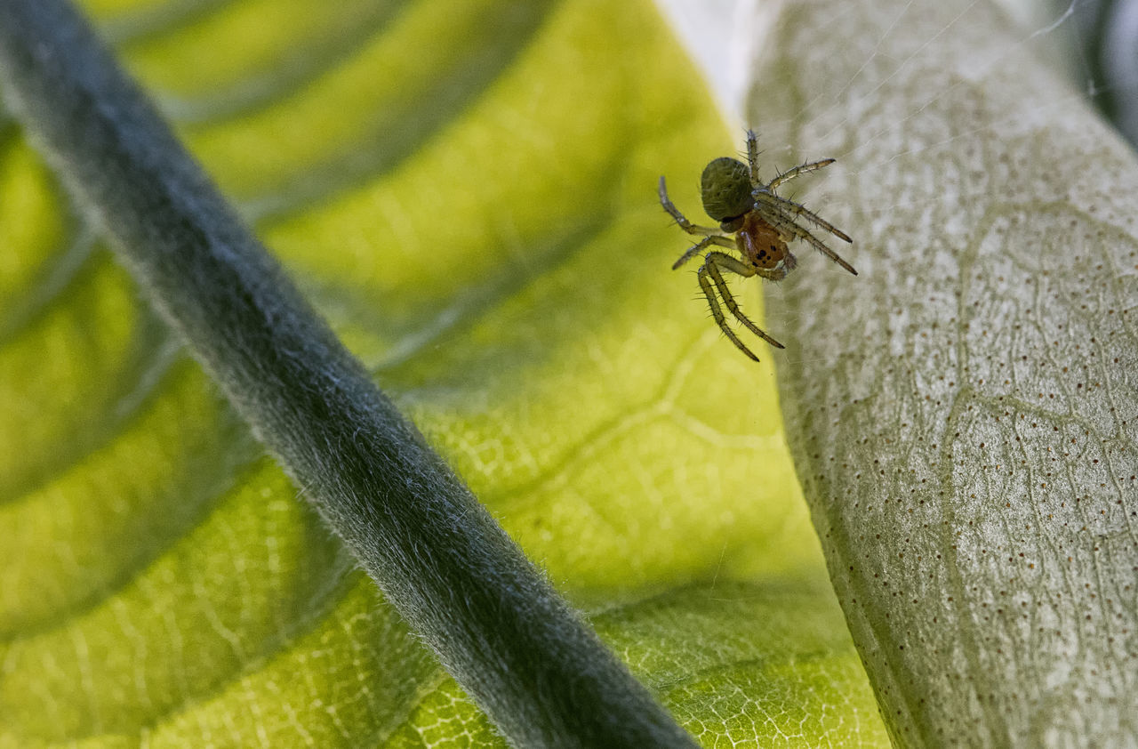 one animal, insect, animal themes, animals in the wild, animal wildlife, close-up, green color, day, no people, outdoors, nature