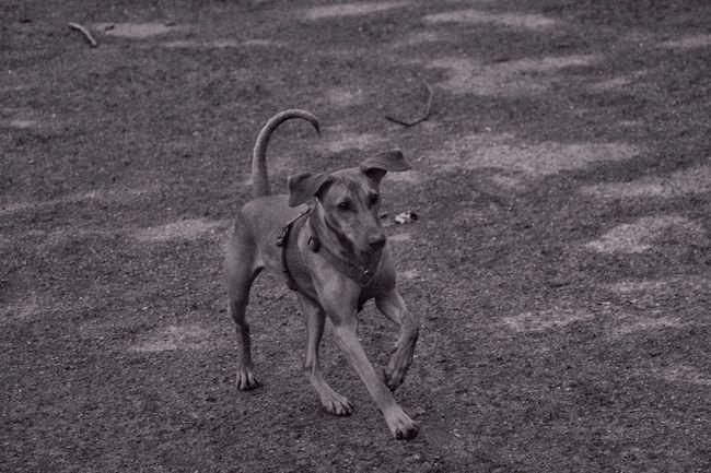 Osterspaziergang mit Hund in Essen-Werden Baldeneysee Photos Official EyeEm © Deutscher Pintscher Hund Dog❤ Eyeemphotography Springtime Black And White Ruhrpottromantik