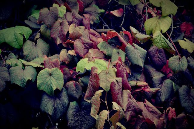 Autumn Autumn Colors Greenery Nature_collection EyeEm Nature Lover Eyem Best Shots Nature_collection Nature Beautiful Nature ❤️🍃🍂🍁 Happy Weekend !!!