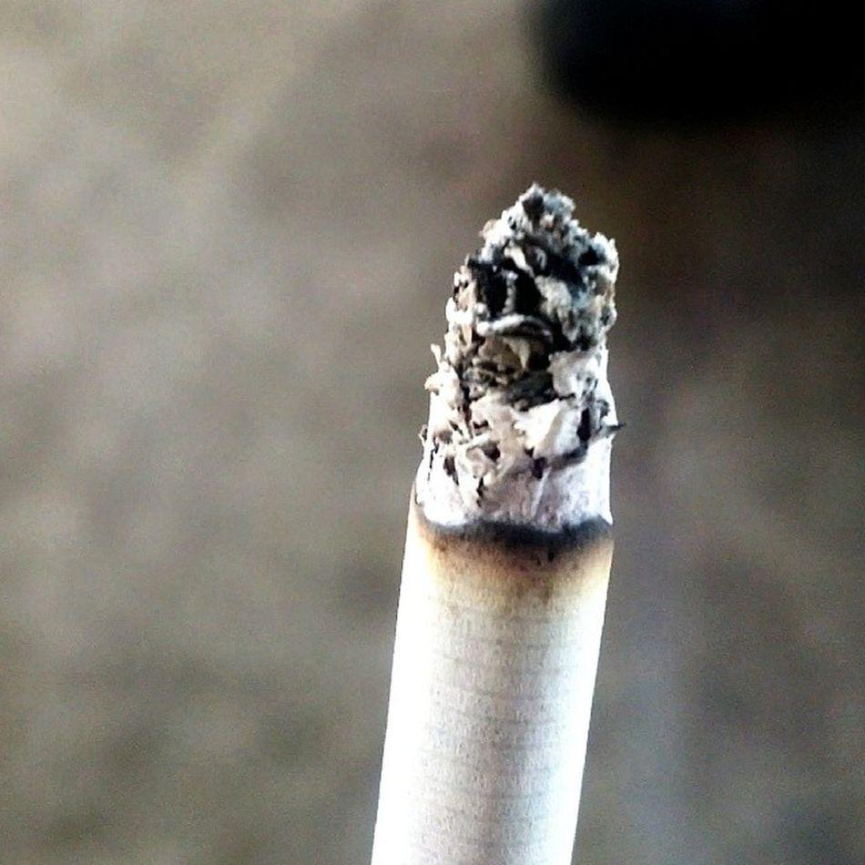 Smoke ?.. 1. No 2. Yes 3. Maybe Cigarete Macro Testonly