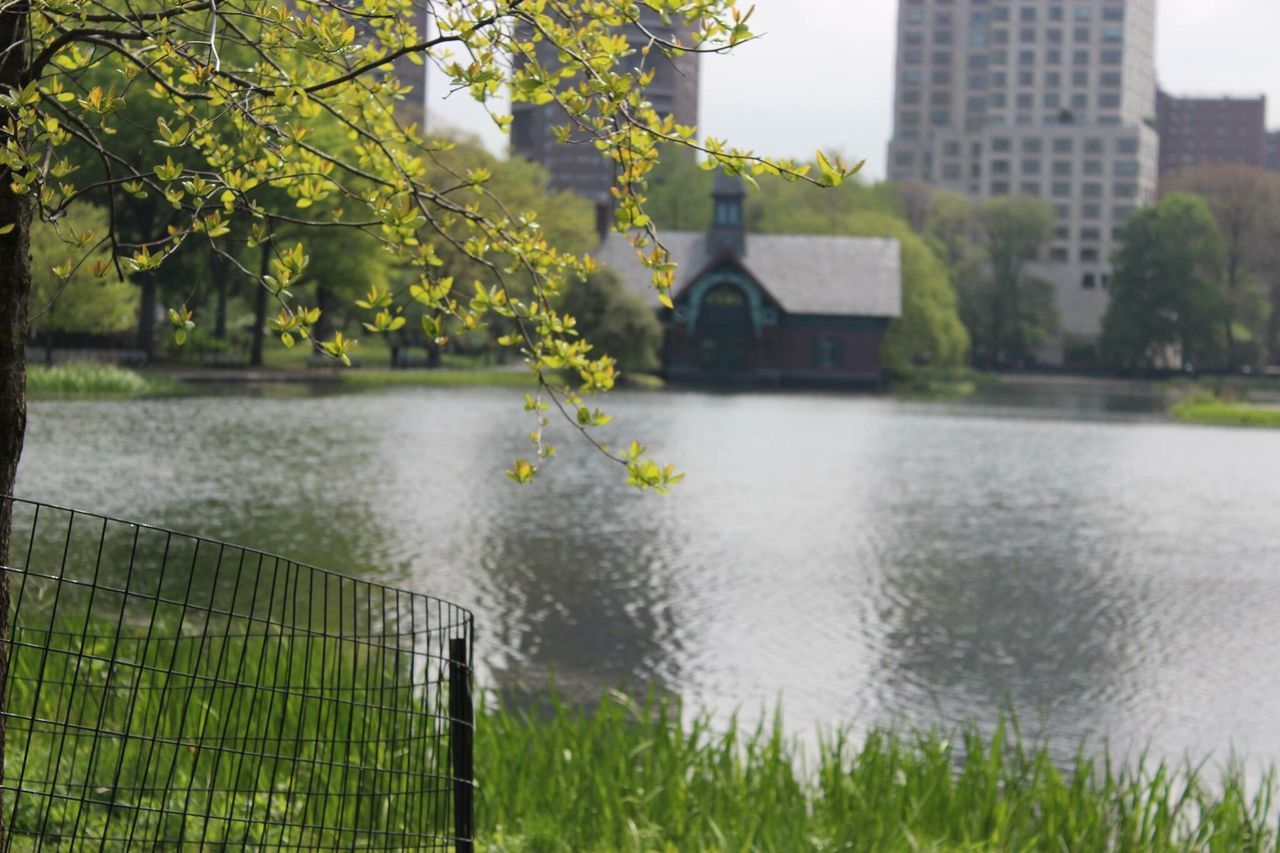 New York Central Park Nature Pond Park Bright Sunny Photographer Photography Canon600D Focus