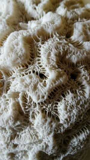 Maximum Closeness Nature Coral Madrepora Close-up Beauty In Nature Sealife Patterns In Nature Pattern