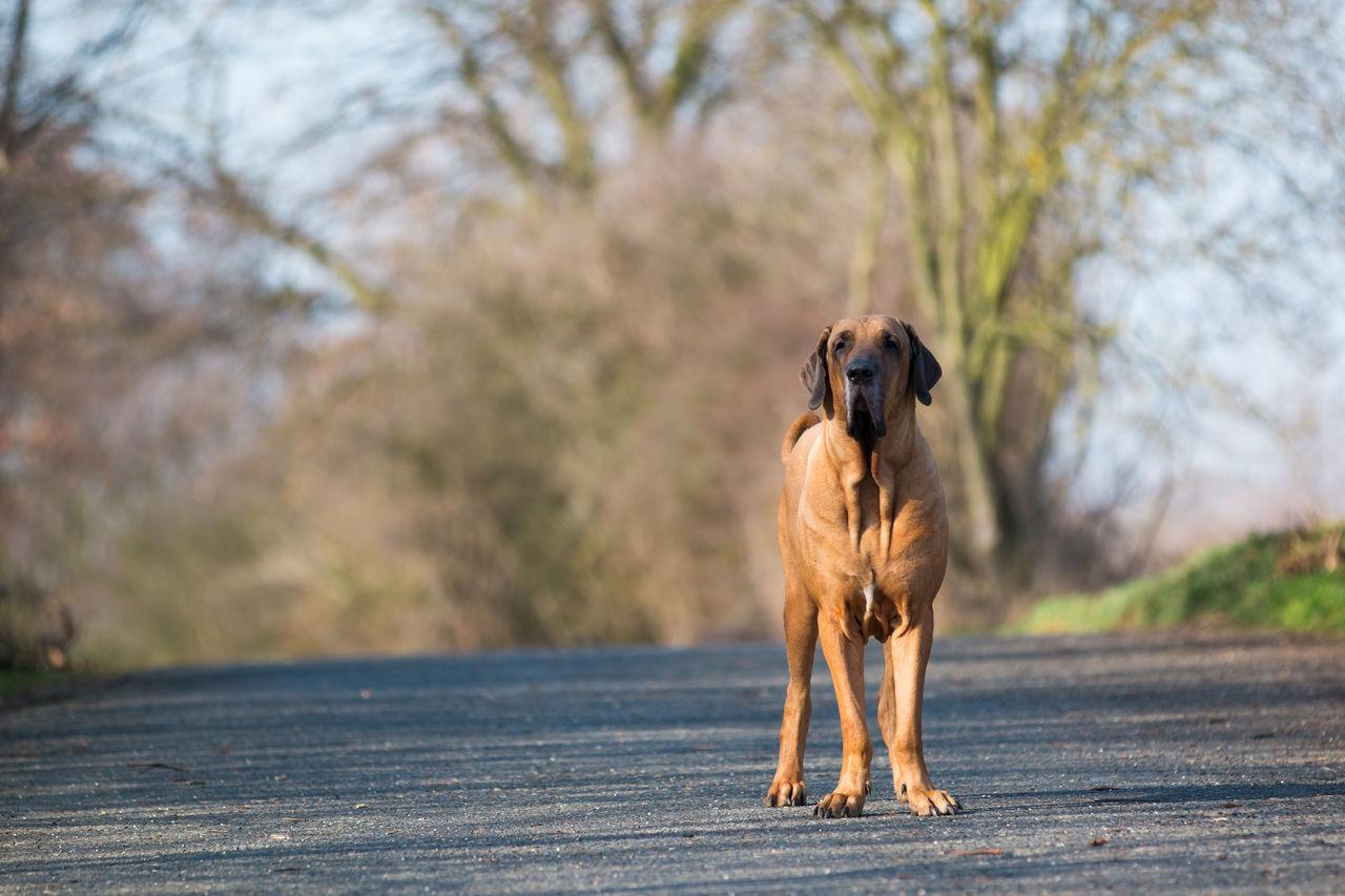 Animal Animal Themes Day Dog Domestic Animals Mammal Nature No People One Animal Outdoors Pets