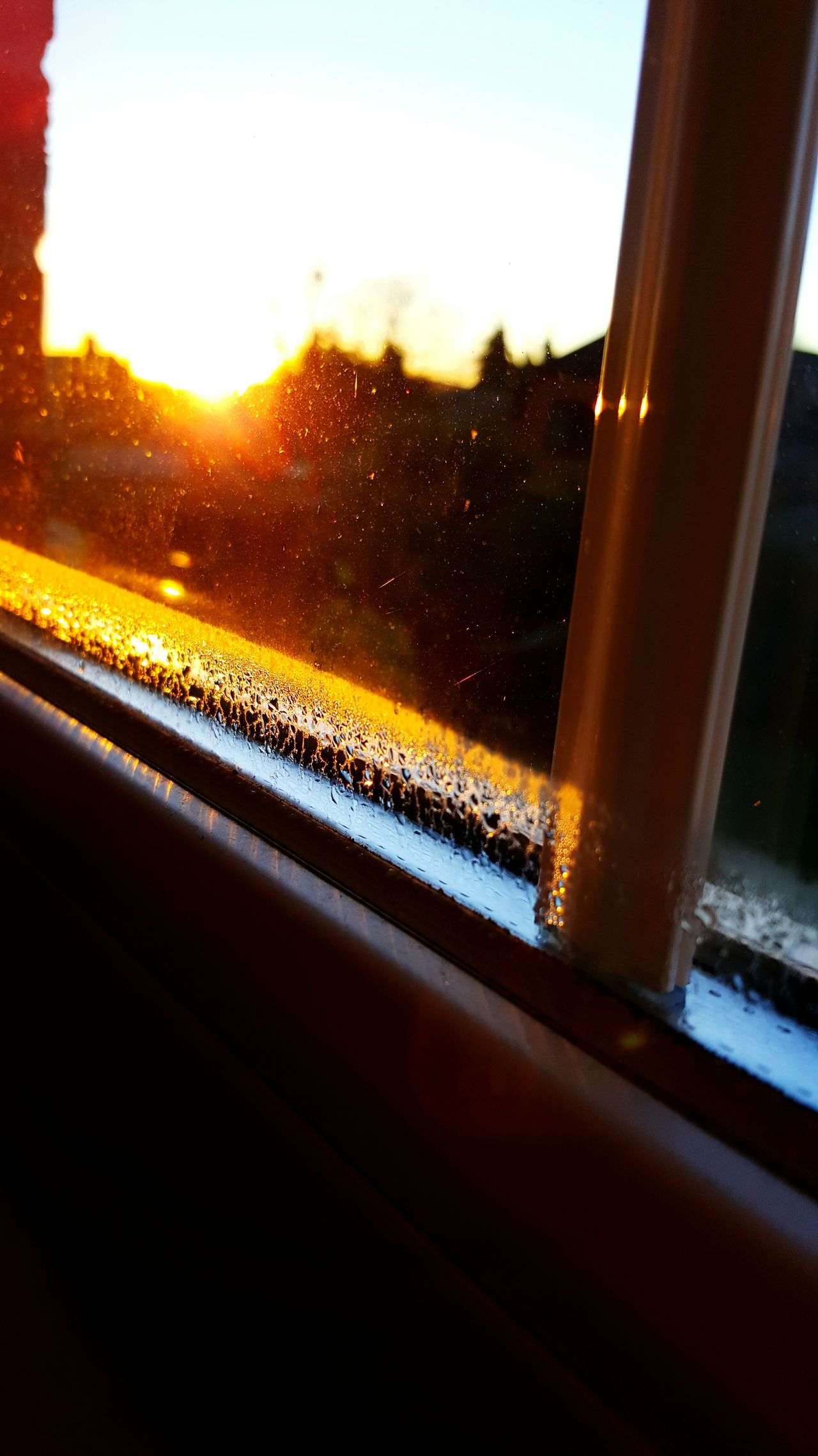 Window Glass - Material Transparent Wet No People Water Nature Day Sky Indoors  Lens Flare Sunlight Sunrise Morning Clear Sky Sun Glare Tree House Nature Outdoors Trees