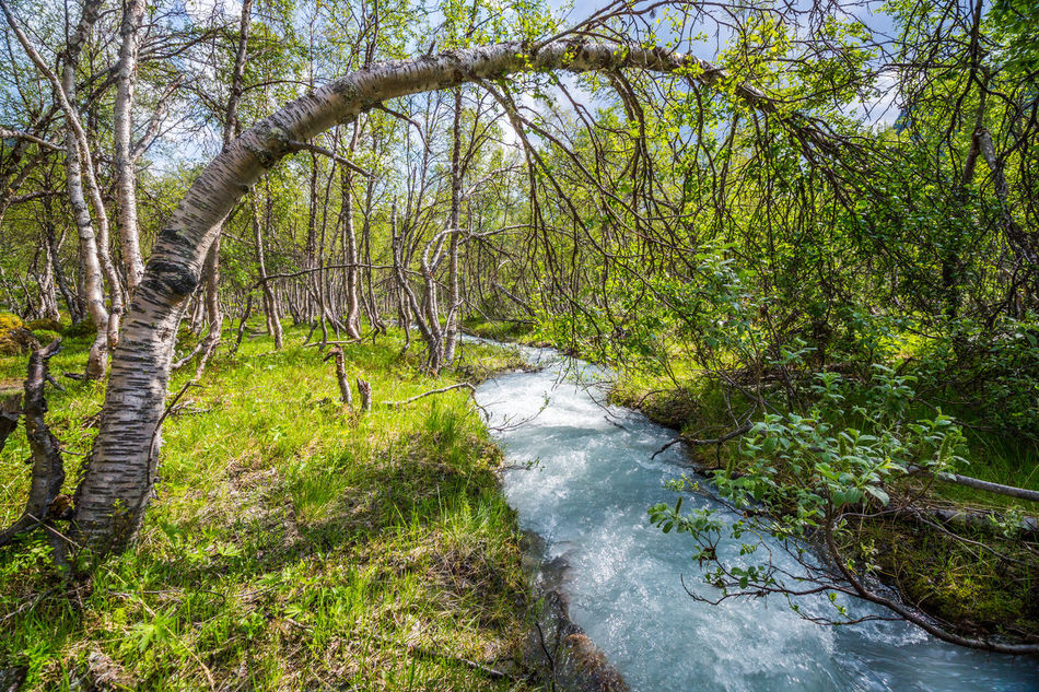 Beauty In Nature Day Flowing Flowing Water Forest Glacier River Grass Green Green Color Growth Idyllic Landscape Lush Foliage Nature No People Northern Norway Norway Outdoors The Great Outdoors - 2016 EyeEm Awards River Scenics Stream Tree Tree Trunk Water