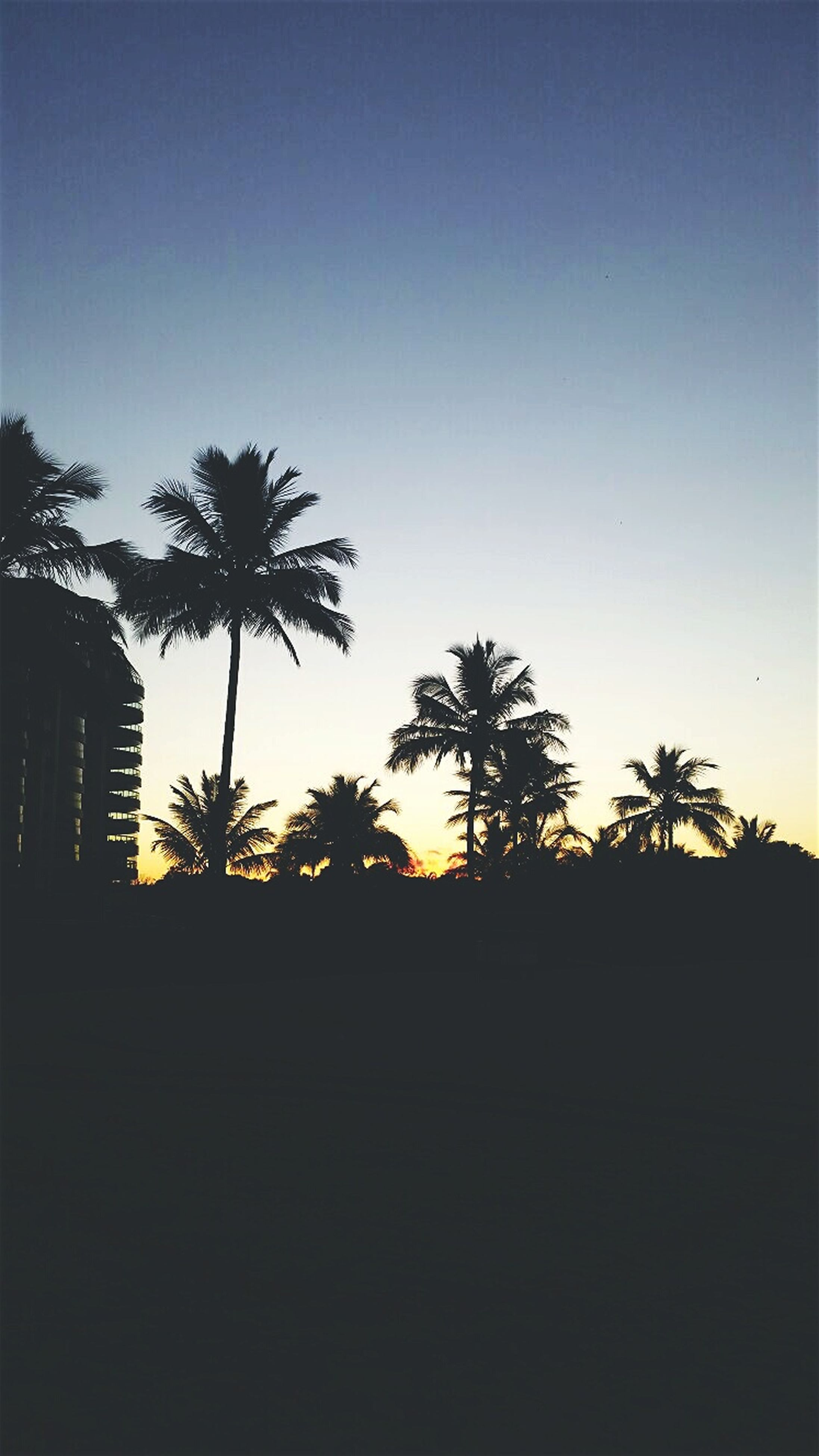 silhouette, sunset, palm tree, tree, copy space, clear sky, built structure, building exterior, tranquility, beauty in nature, architecture, tranquil scene, scenics, nature, sky, dark, orange color, outline, growth, no people
