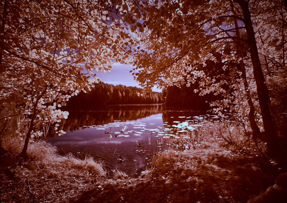 Infrared lakescape in autumn light. Beauty In Nature Calm Countryside Growth Infra Red Infrared Infrared Photo Infrared Photography Lake Lakeside Majestic Nature No People Non-urban Scene Outdoors Reflection Remote Scenics Sky Solitude Standing Water Tranquil Scene Tranquility Tree Water