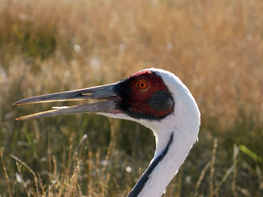 Red Eye Bird Photography Birdwatching Birds Of EyeEm  Birds_collection Birds🐦⛅ Birds Eye View Birds EyeEm Best Shots EyeEm Nature Lover Eyembirds.