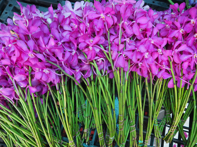 💐 Beauty In Nature 💐 Close-up Day Exceptional Photographs Flower Flower Head Fragility Freshness Growth Horizontal Market Market Stall Multi Colored Nature No People Orchids Outdoors Patterns In Nature Petal Plant Purple Street Photography Tadaa Community Travel