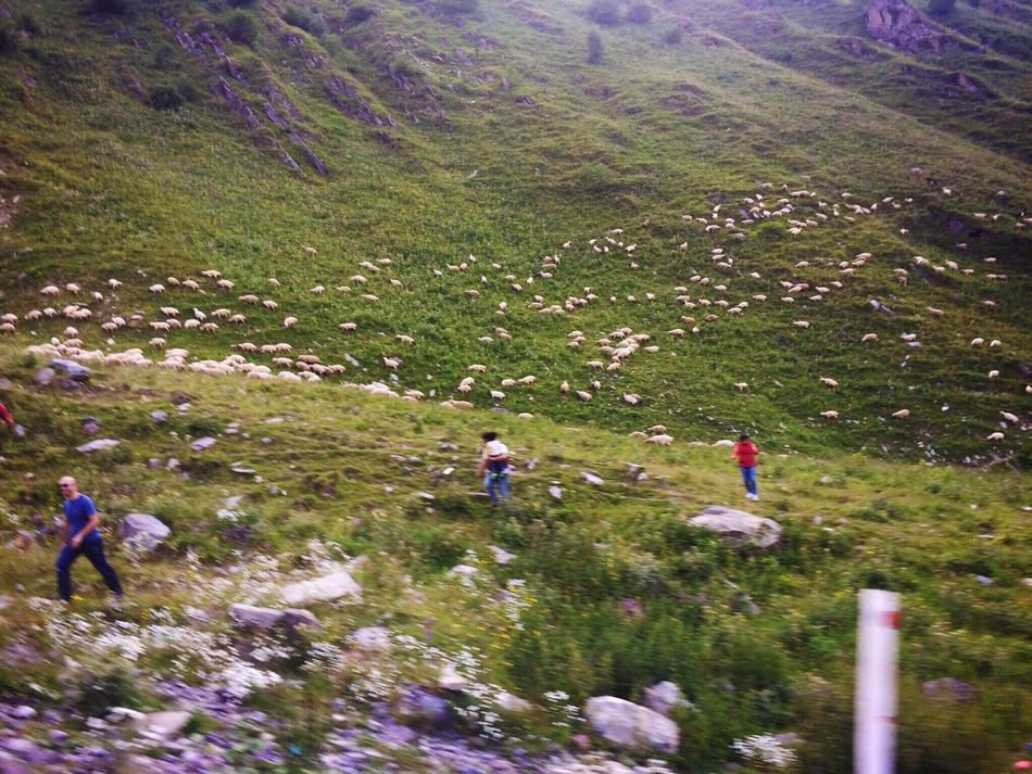 Little Love Atoms Trip Mountain Kazbegi Mountains