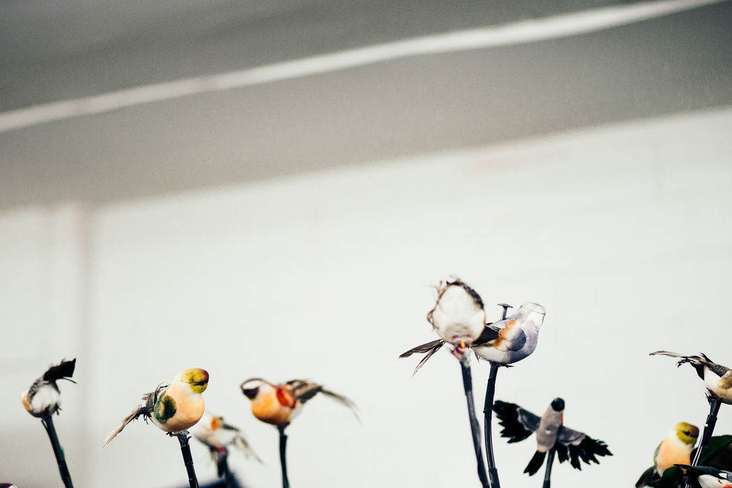 behind the curtain Animal Themes Backstage Behind The Curtain Birds Close-up Day Fragility Fundus Indoors  Nature No People Stuffed Animals Theater Theater Life