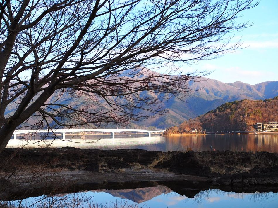 Water Tree Nature Beauty In Nature Scenics Outdoors Mountain Landscape Lake Branch Kawakuchi Kawaguchiko Travel Destinations Reflection Japan Spring Springtime The Great Outdoors - 2017 EyeEm Awards