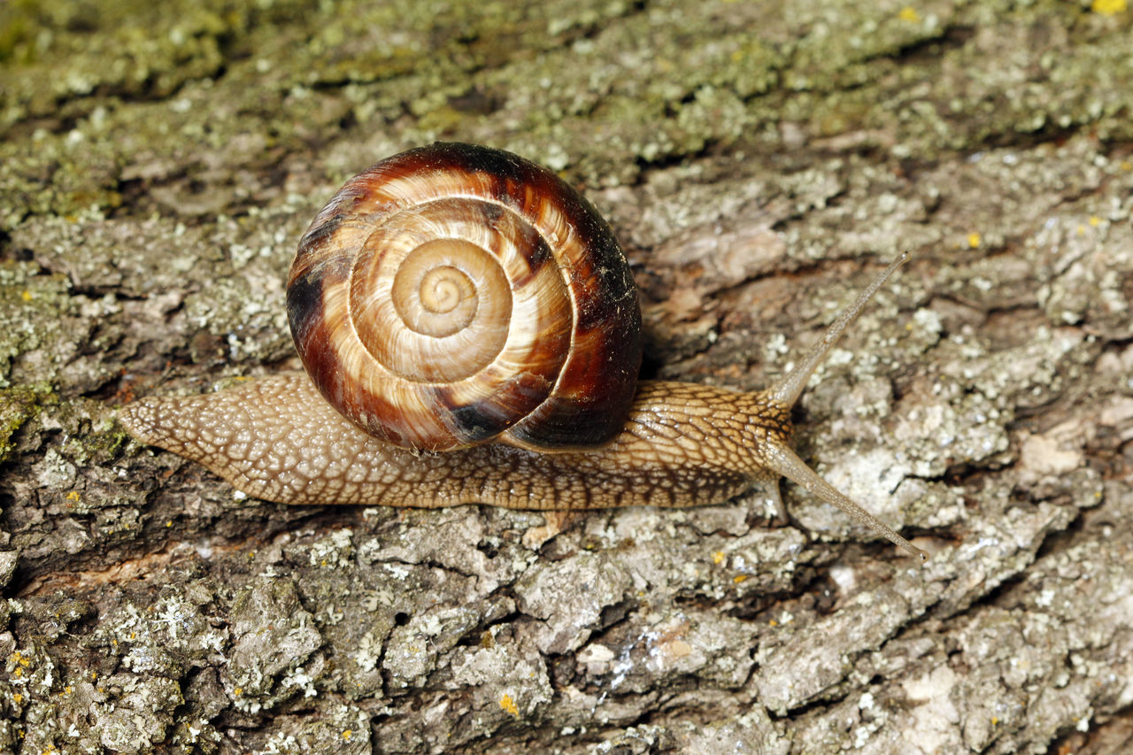 snail Animal Escargot Garden Snail Snail Tree Wood
