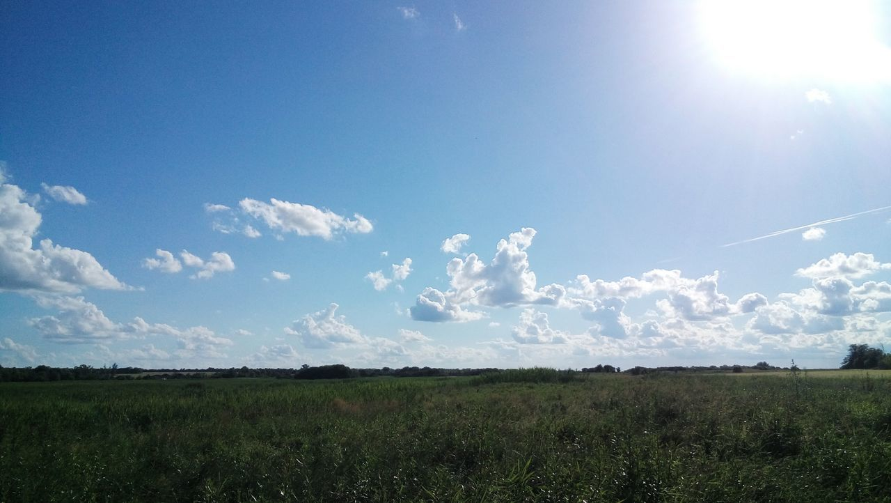 Sky Nature Landscape Scenics Field Outdoors Tranquility Beauty In Nature No People Cloud - Sky Growth Tranquil Scene Day Grass Open Edit OpenEdit Привет всем Nature Hola! My Photography Привет всем! Clear Sky Place Where I Live Streetphotography Walking