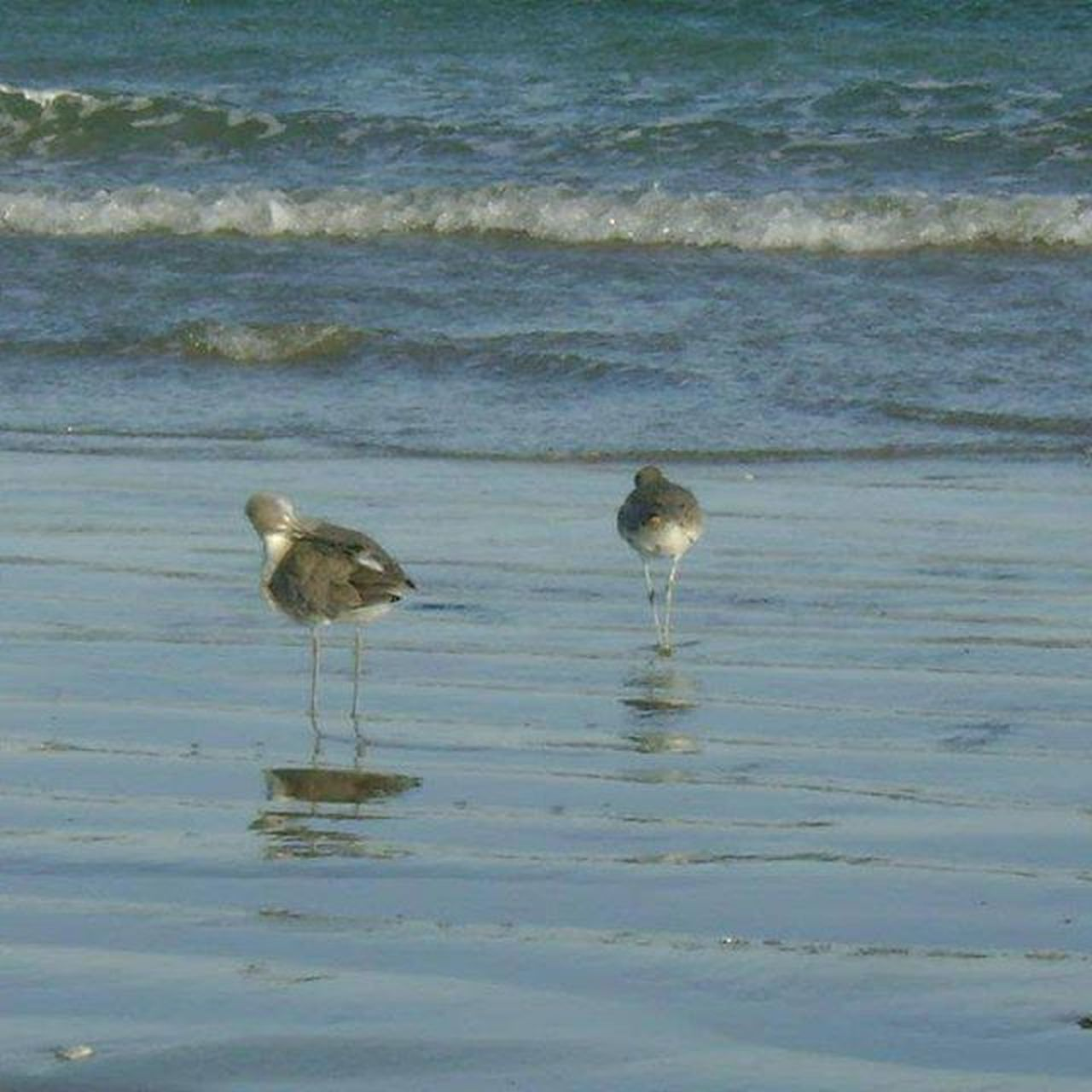 bird, water, animals in the wild, animal wildlife, animal themes, nature, no people, day, outdoors, beauty in nature