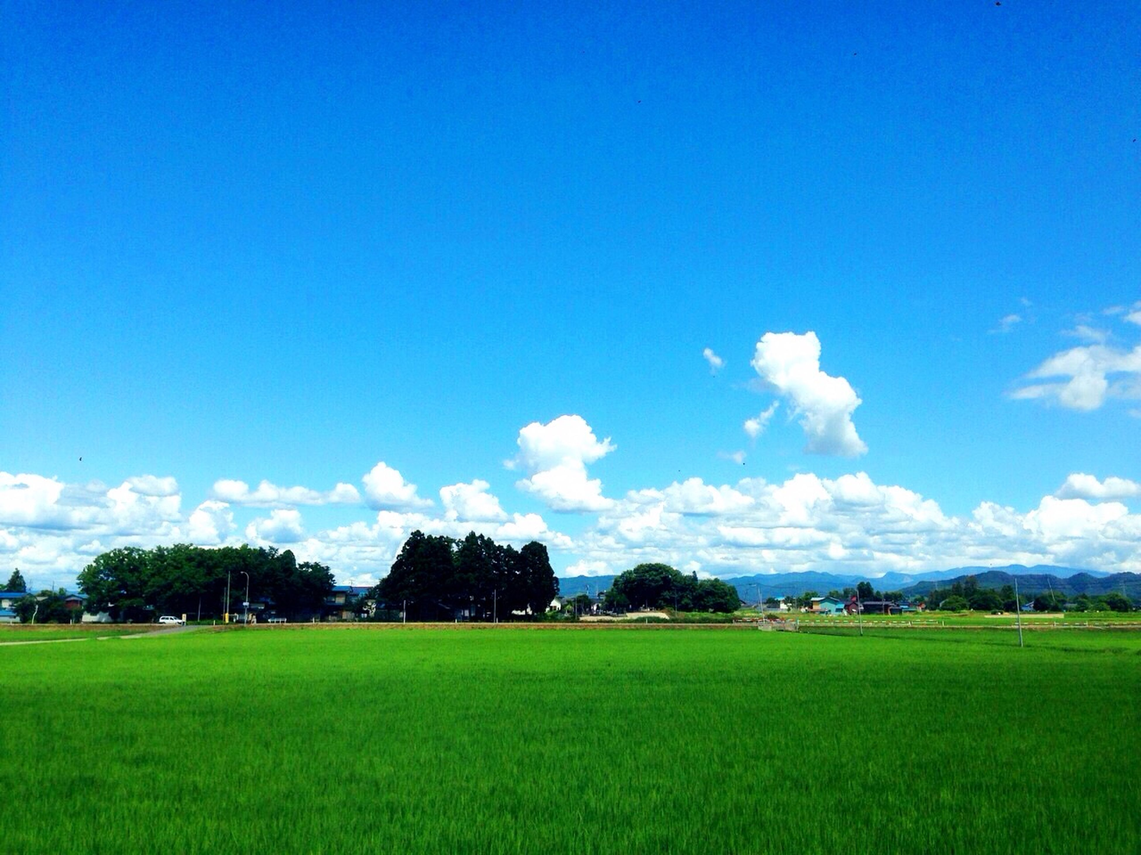 field, landscape, blue, grass, sky, tranquil scene, tranquility, tree, beauty in nature, green color, scenics, nature, rural scene, growth, agriculture, grassy, cloud, farm, green, idyllic