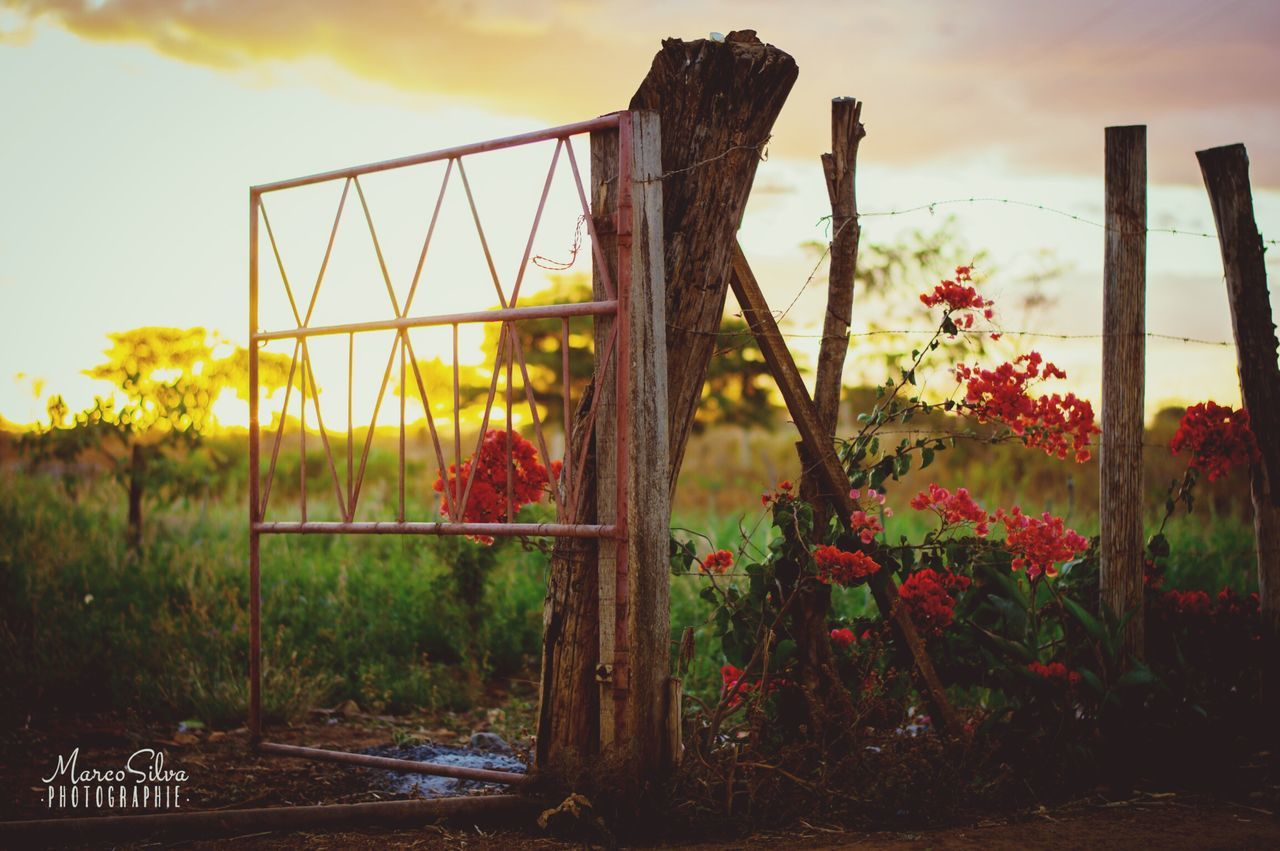 growth, sky, plant, outdoors, nature, no people, day, flower, field, beauty in nature, grass, tranquility, cloud - sky, sunset, close-up