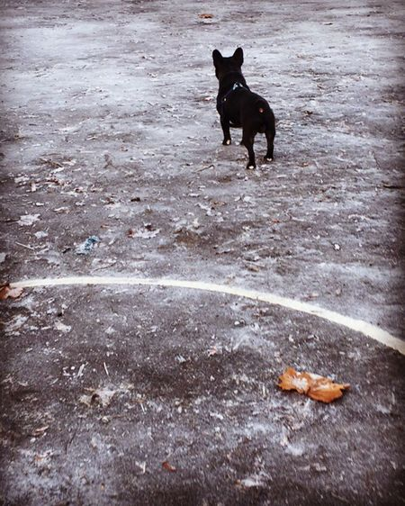 The Great Outdoors - 2017 EyeEm Awards Dog Frenchbulldog Manchester The Street Photographer - 2017 EyeEm Awards Live For The Story Let's Go. Together.