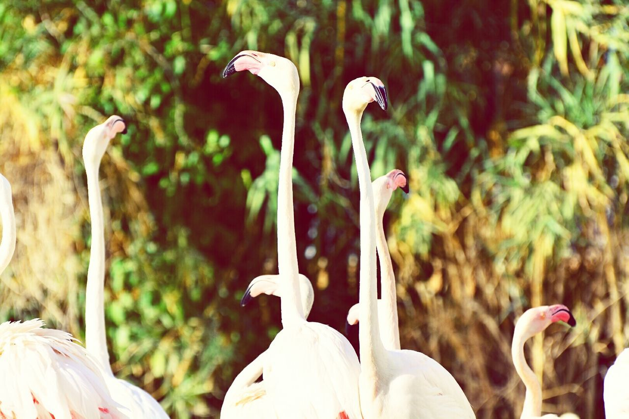 Flamingo bird Bird Animal Wildlife Nature Animal Themes Outdoors No People Animal Archival Mammal Day First Eyeem Photo