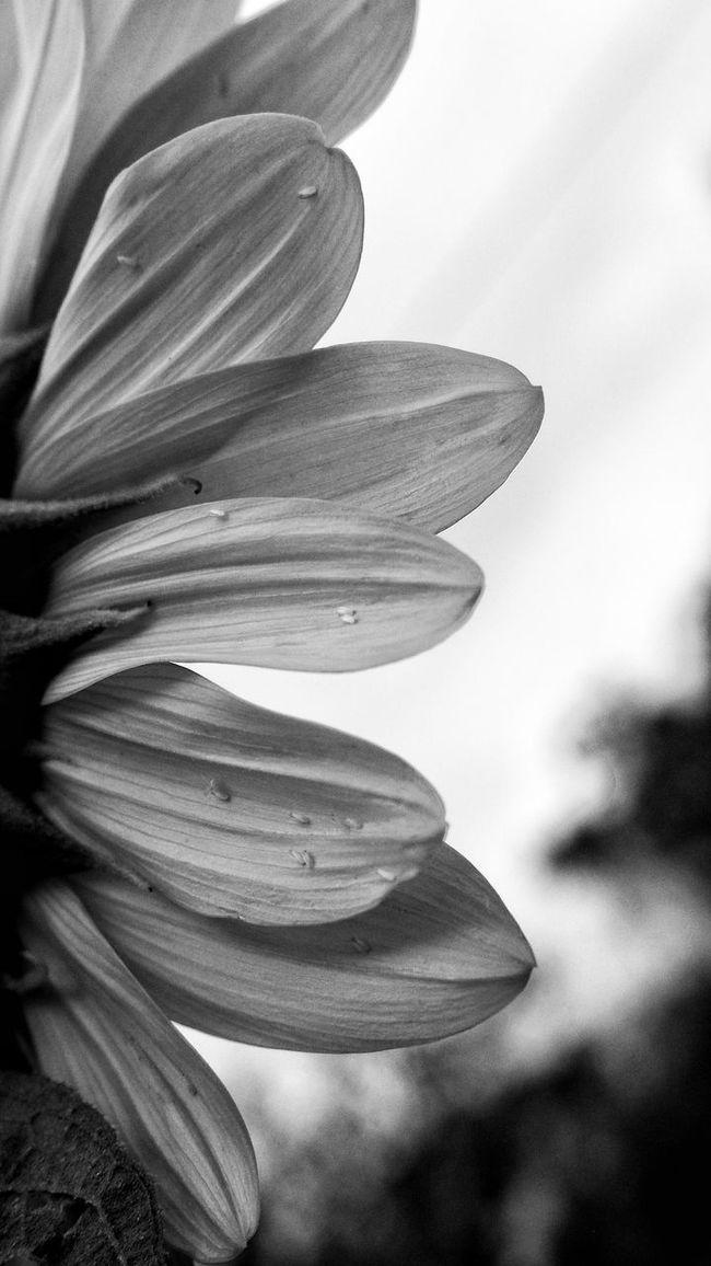 Sowing the seeds EyeEm Masterclass Tadaa Community Nature Blackandwhite Light And Shadow Monochrome Eye4photography  EyeEm Best Shots EyeEm Nature Lover Plants
