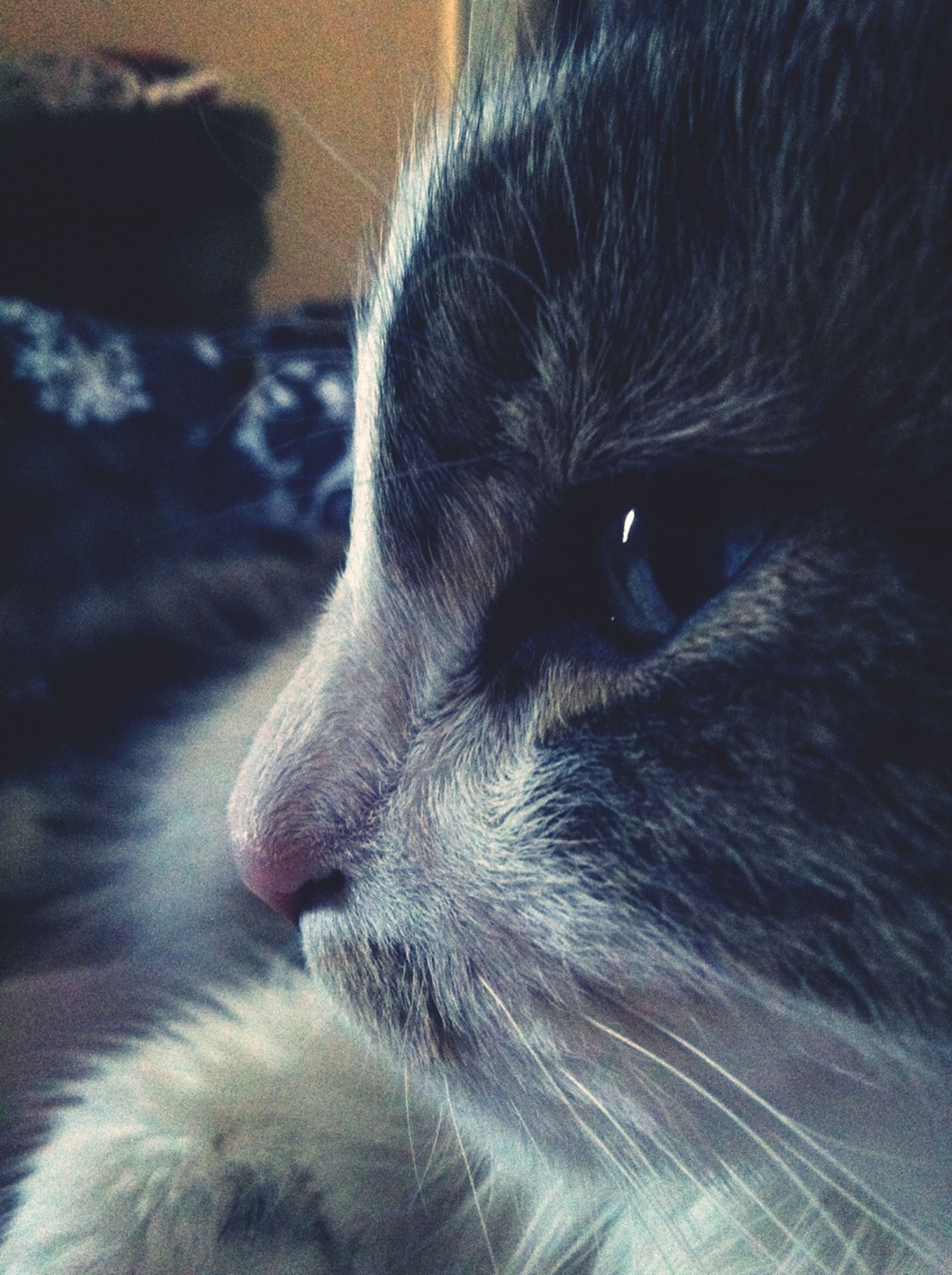 one animal, pets, animal themes, domestic animals, mammal, animal head, close-up, dog, animal body part, domestic cat, indoors, cat, whisker, no people, animal hair, looking away, relaxation, part of, feline, focus on foreground