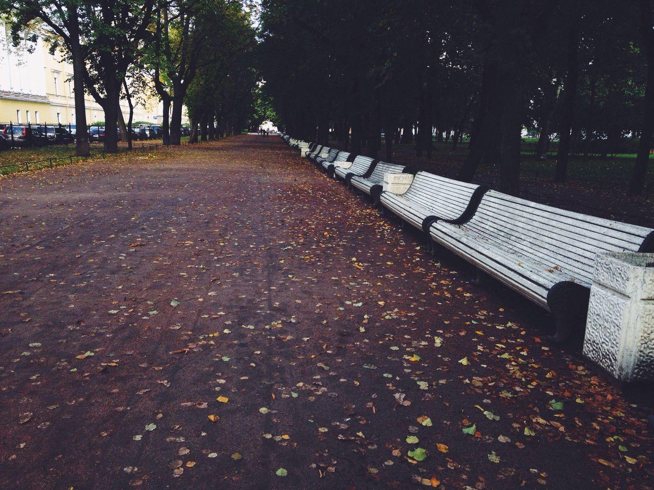 Saintpetersburg Autumn Walking Around