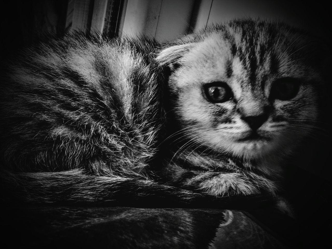 Кысенька Котэ 😻 кисуля кошкиправятмиром