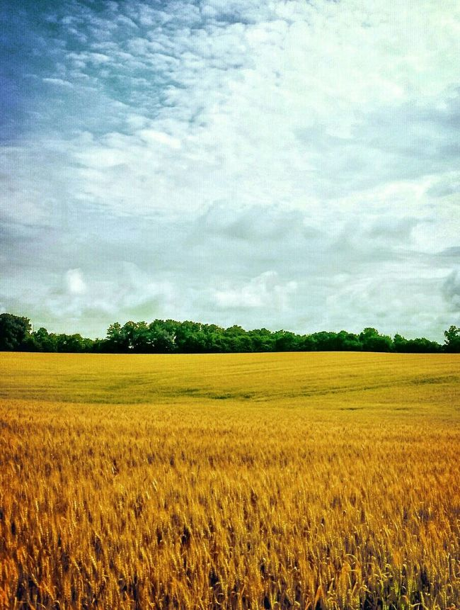 Landscape Landscape_Collection Naturelovers Nature Agriculture Hayfield Sky And Clouds Landscapelovers Scenery Tenessee Scenery