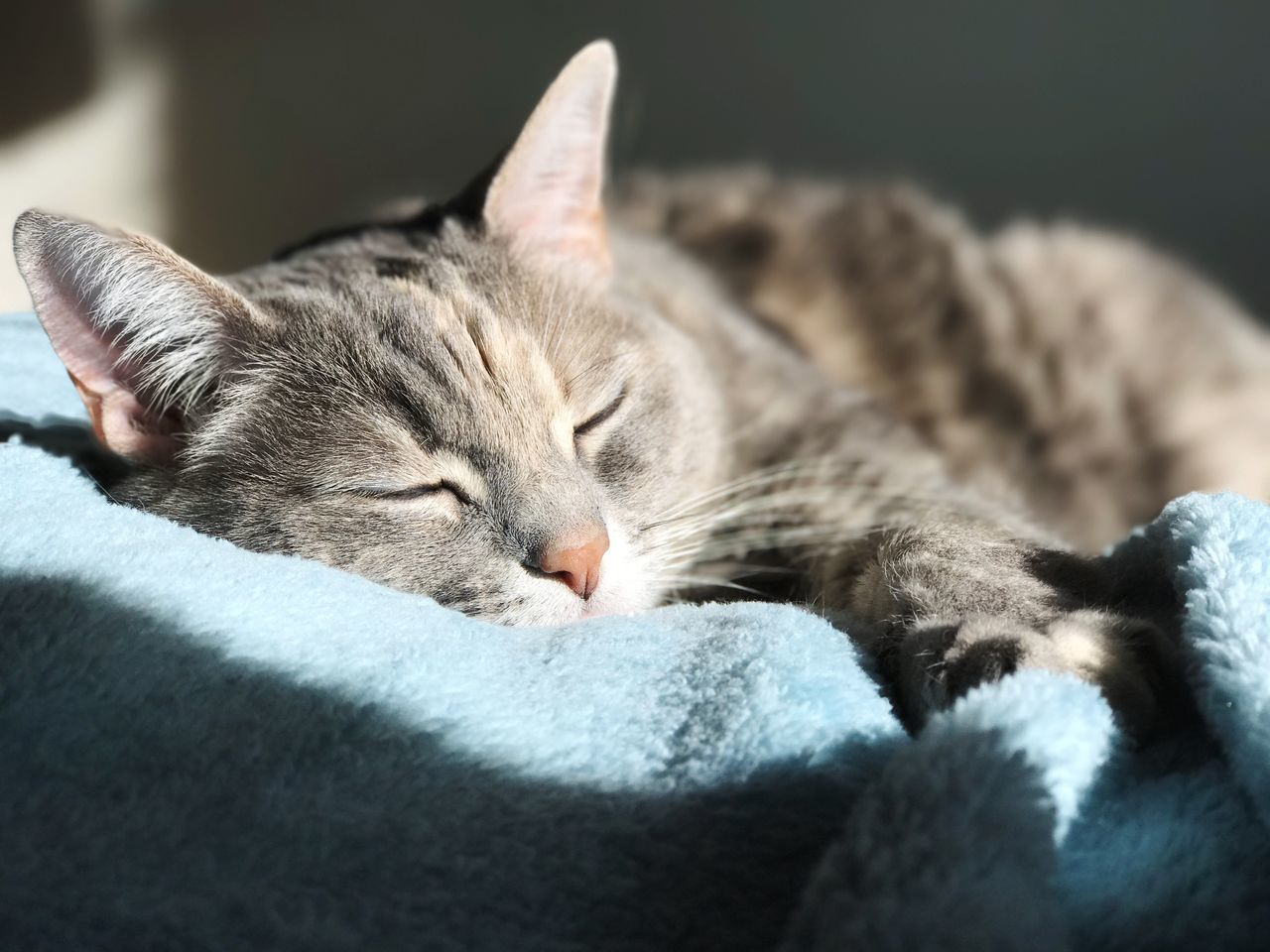 Domestic Cat Cat Sleeping Cat Cat In Sunbeam Animal Themes Pets Eyes Closed  Domestic Animals Relaxation Sleeping Whisker Close-up Feline Indoors