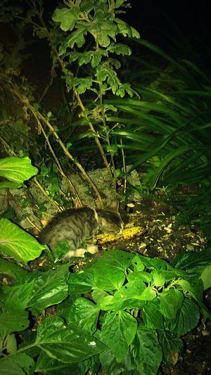 Kitten First Eyeem Photo