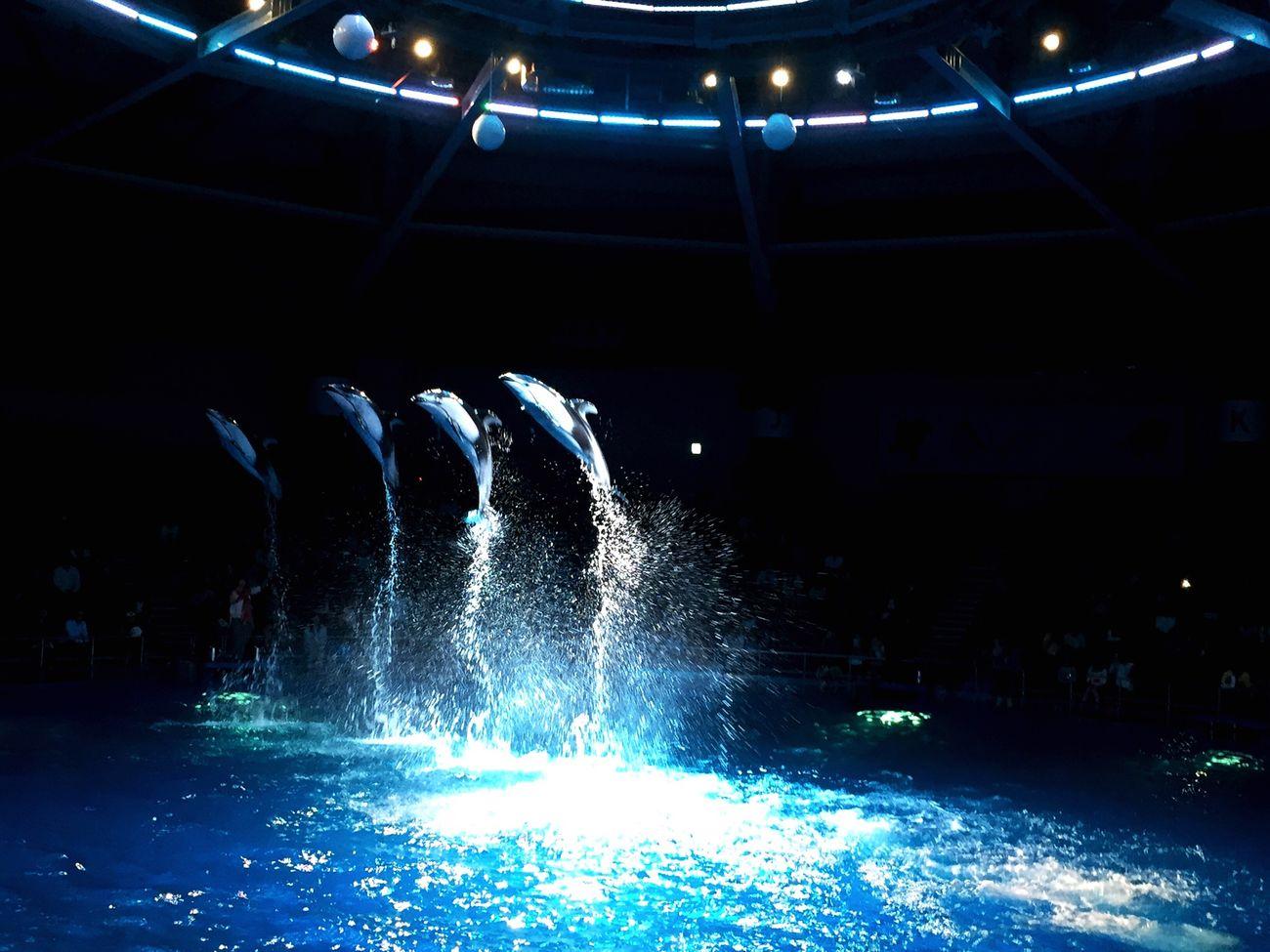 Aquarium Dolphin Japan Tokyo Shinagawa Aquarium 品川
