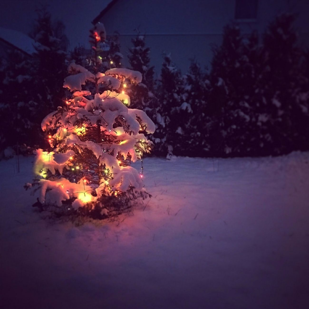 Christmas Tree Christmas Snow Lights