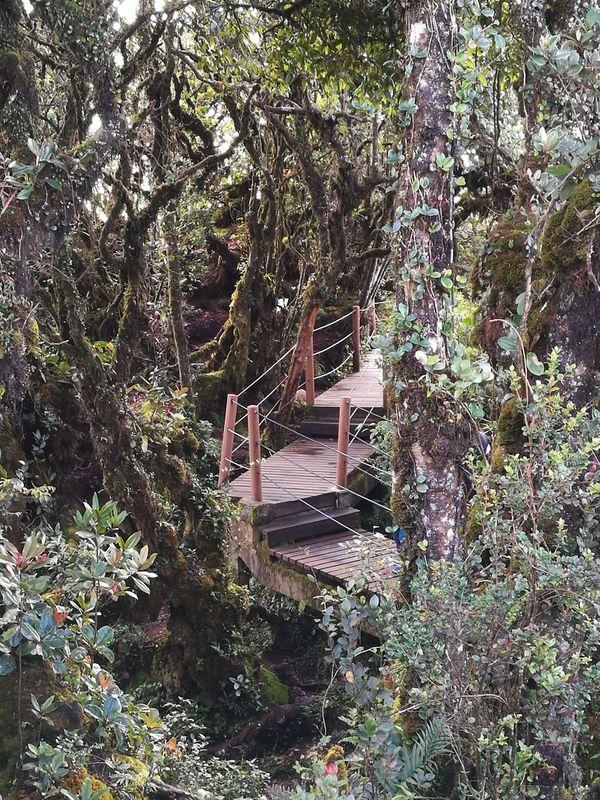 Nature Nature Highlands jungle trekking Forest Park Cameronhighlands Mossyforest WoodLand