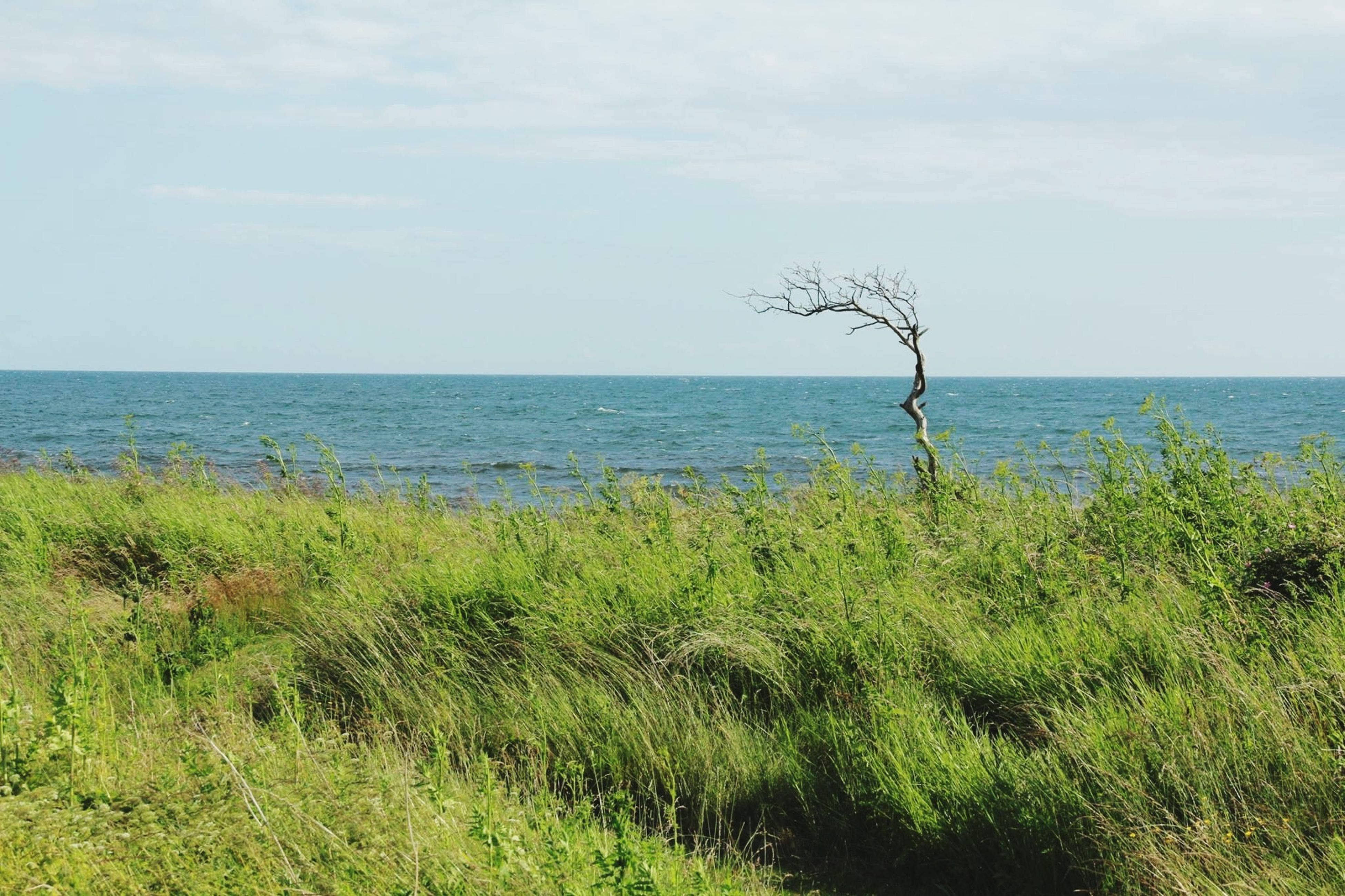 horizon over water, sea, water, tranquil scene, tranquility, sky, beauty in nature, scenics, growth, nature, plant, grass, beach, green color, idyllic, shore, day, tree, remote, growing
