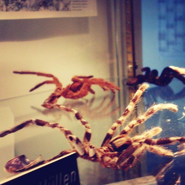 Reptilienmuseum