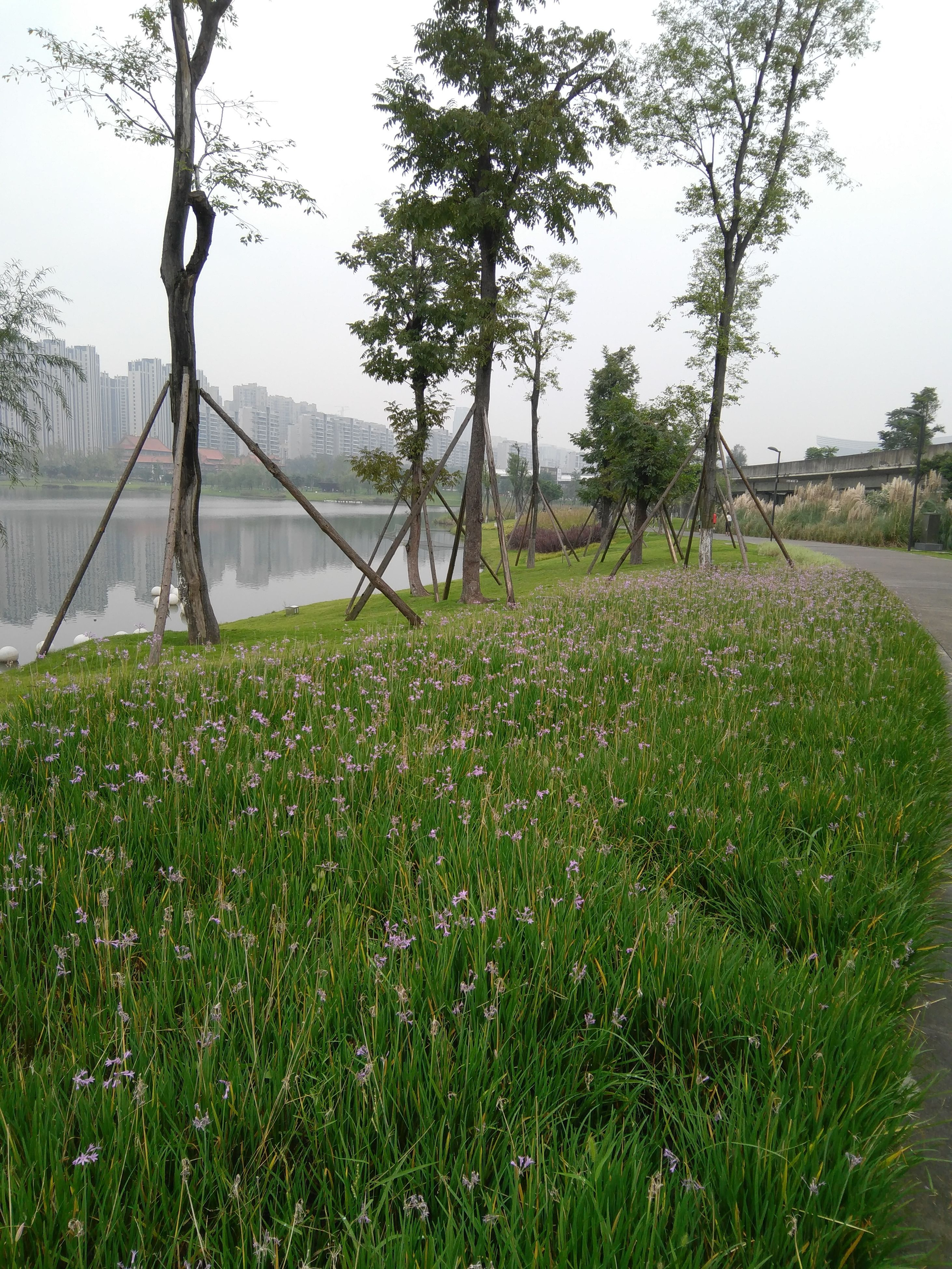 grass, growth, tree, green color, field, tree trunk, water, tranquility, grassy, tranquil scene, bridge - man made structure, nature, plant, branch, beauty in nature, day, sky, scenics, suspension bridge, no people, grassland, growing