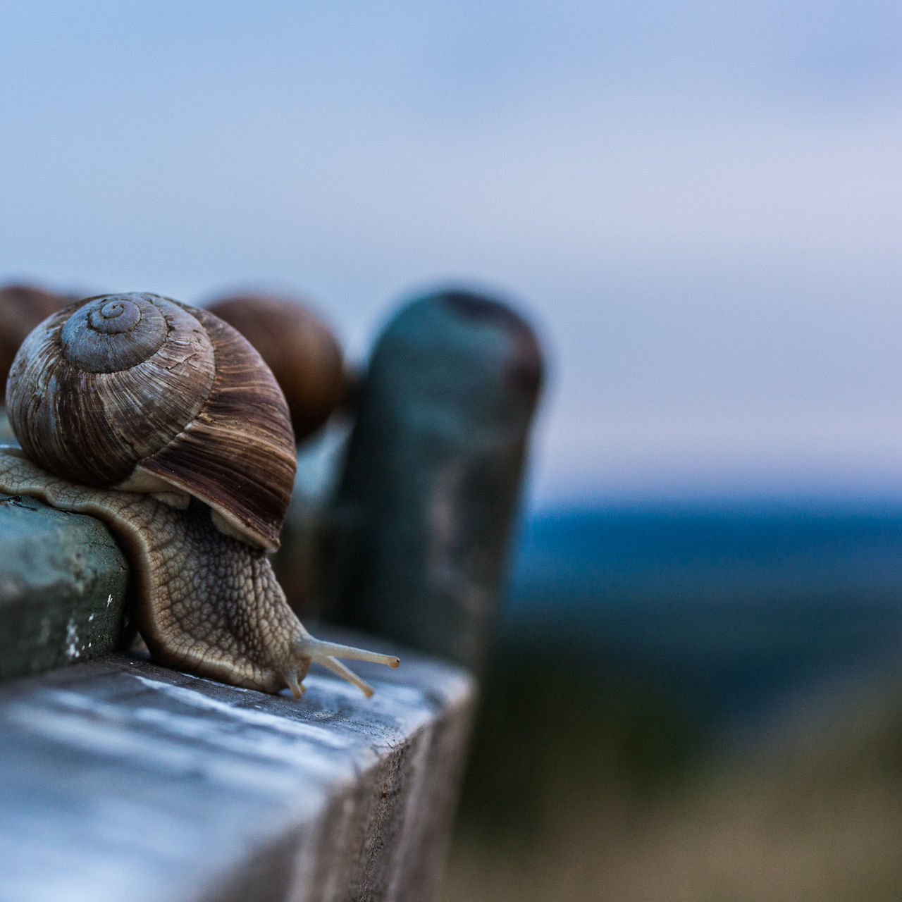 snail, nature, close-up, animal themes, gastropod, no people, focus on foreground, day, one animal, outdoors, animals in the wild, water, beauty in nature, sky