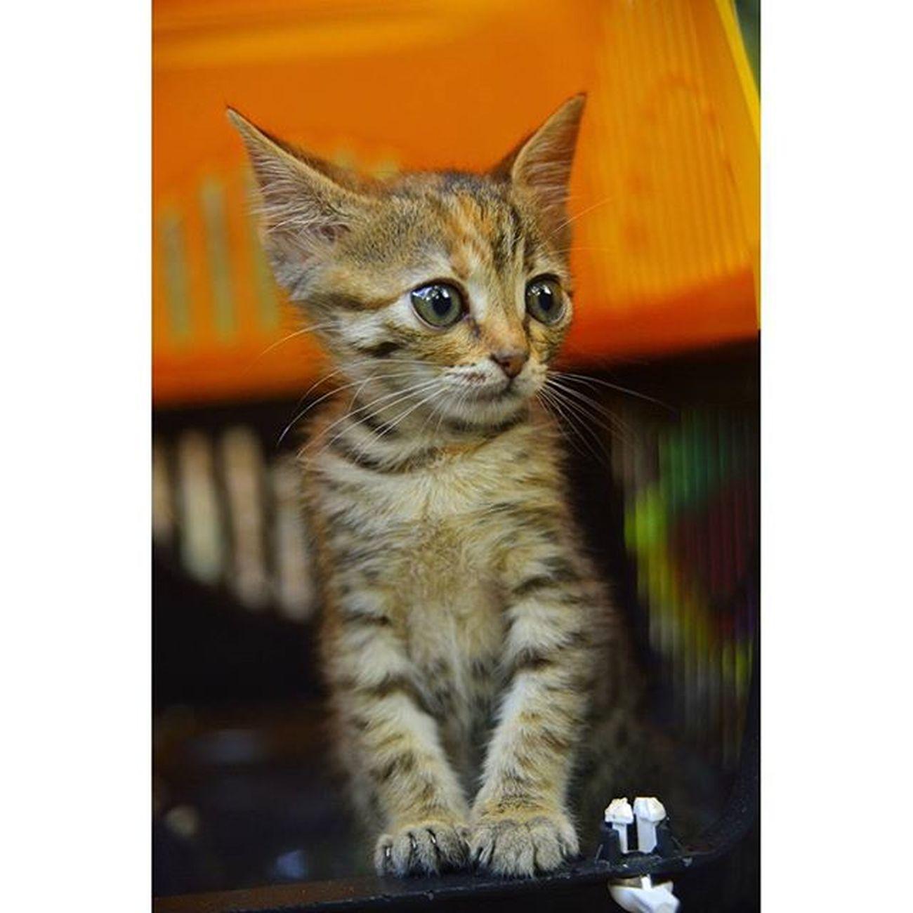 Günaydin Cat Cats Catstagram Catsofinstagram Catoftheday Animal Animals Animallovers Animales Kedizihni Kedizim Catstagram Cat Cats Kediciler Cirkinkedi Cirkinkediler