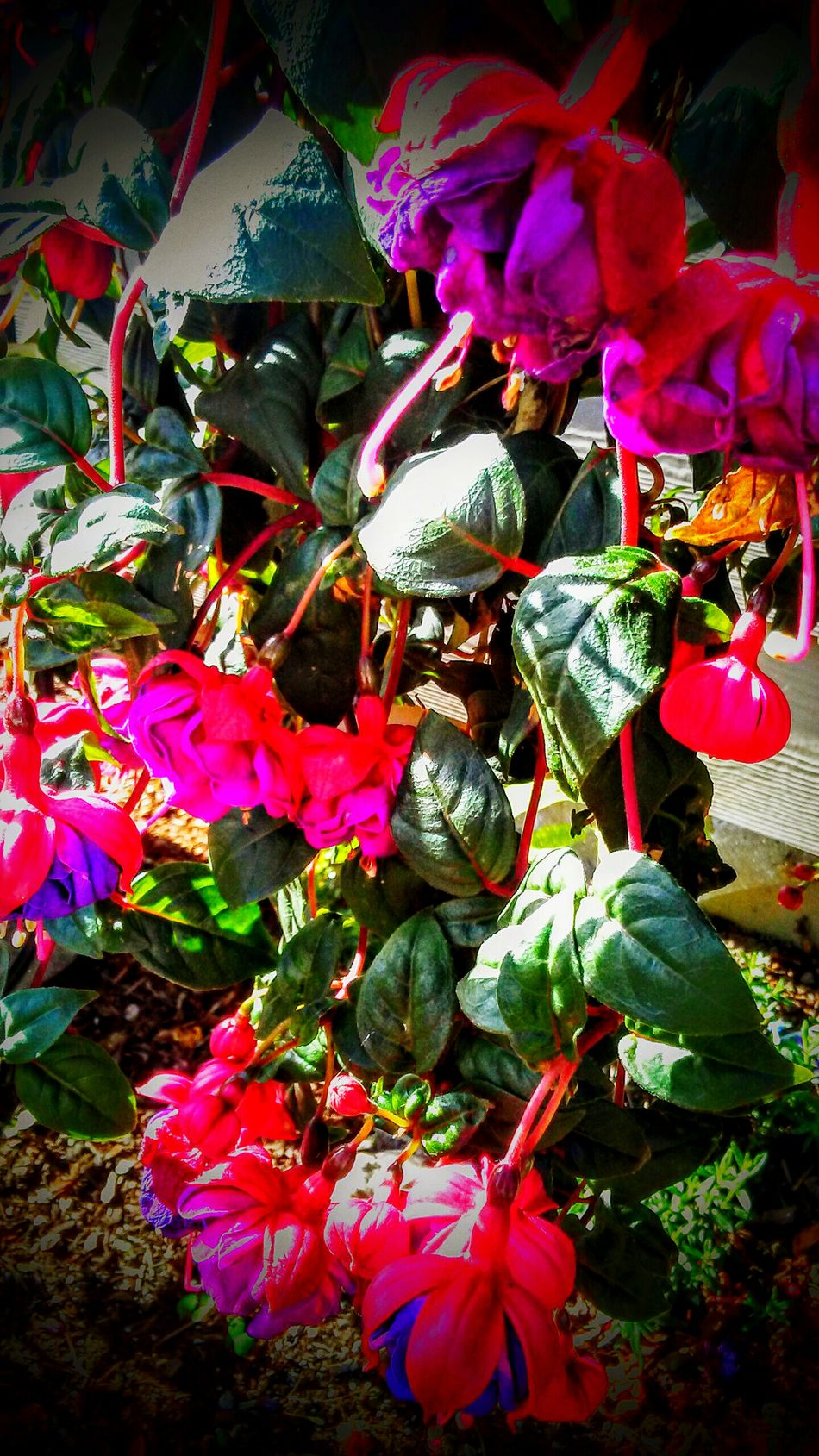 Vibrant Colorsplash Summer ☀ Labor Of Love Garden Photography Summer Blooms Botanical Gardens