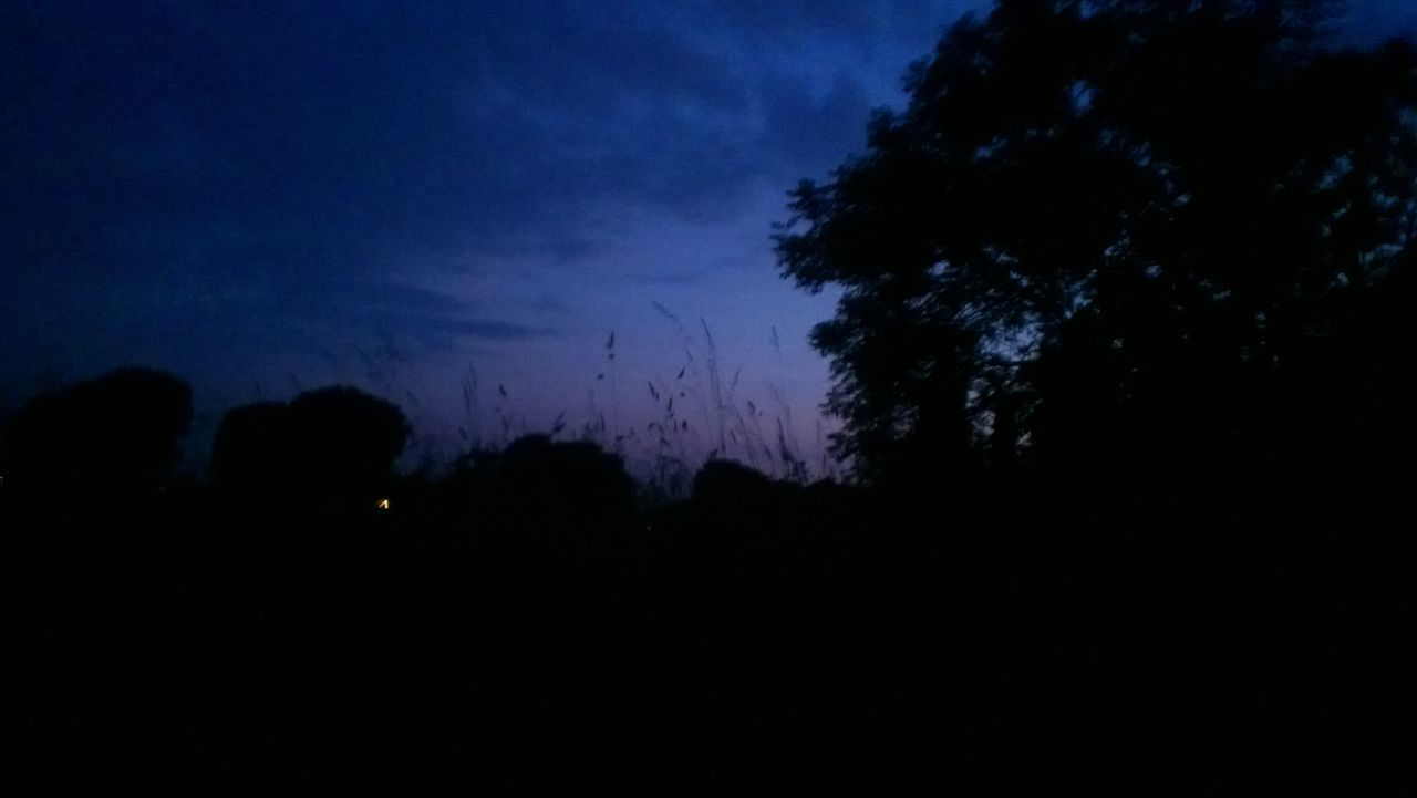 silhouette, night, nature, dark, beauty in nature, sky, tree, scenics, tranquility, landscape, moon, no people, outdoors