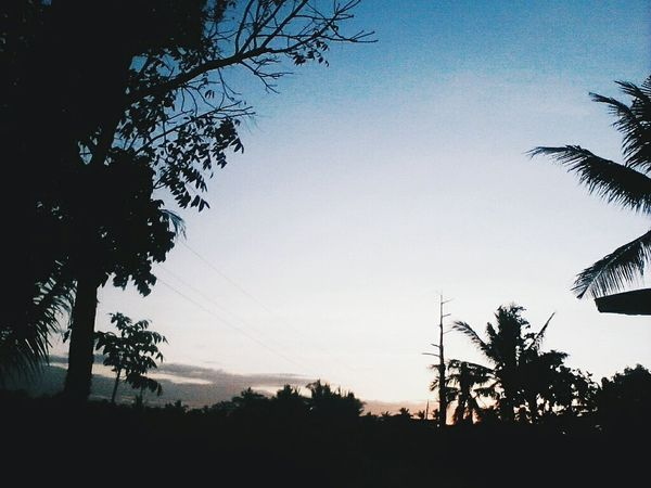 But without the dark, we'd never see the light. Minimal Minimalism Minimalmood Minimalobsession Minimalism Photography Minimalover Minimalexperience Tree Silhouette Sky Sunset Nature Outdoors Scenics