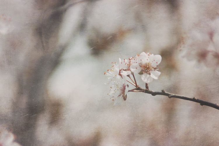 Flowers Flower Nikkor Springflowers Mextures