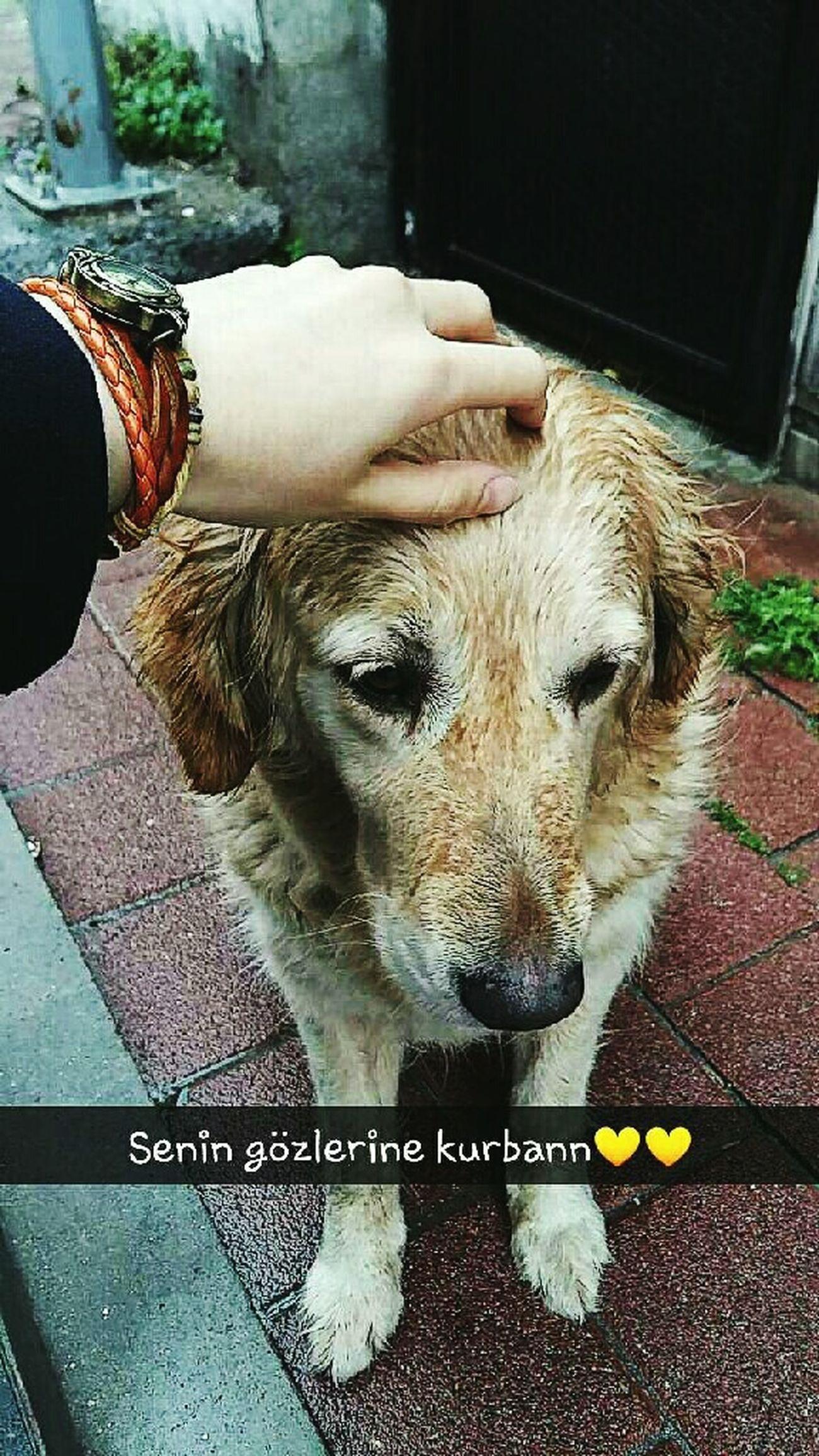 Dog Love Animal Lovelovelove Masum Eye Eye4photography  EyeEmBestPics Thislove Likeforlike #likemyphoto #qlikemyphotos #like4like #likemypic #likeback #ilikeback #10likes #50likes #100likes #20likes #likere Sokaktahayatvar Sokakfotografi Sokaklarınengüzelyanı Favorite Picture Sadeceokşayeter 👑