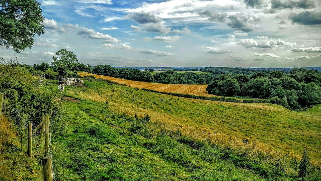 Landscape_photography Hills Gentle Slope Fields Crops Cows Grazing Colourful Sky And Clouds @ Aston Cheshire