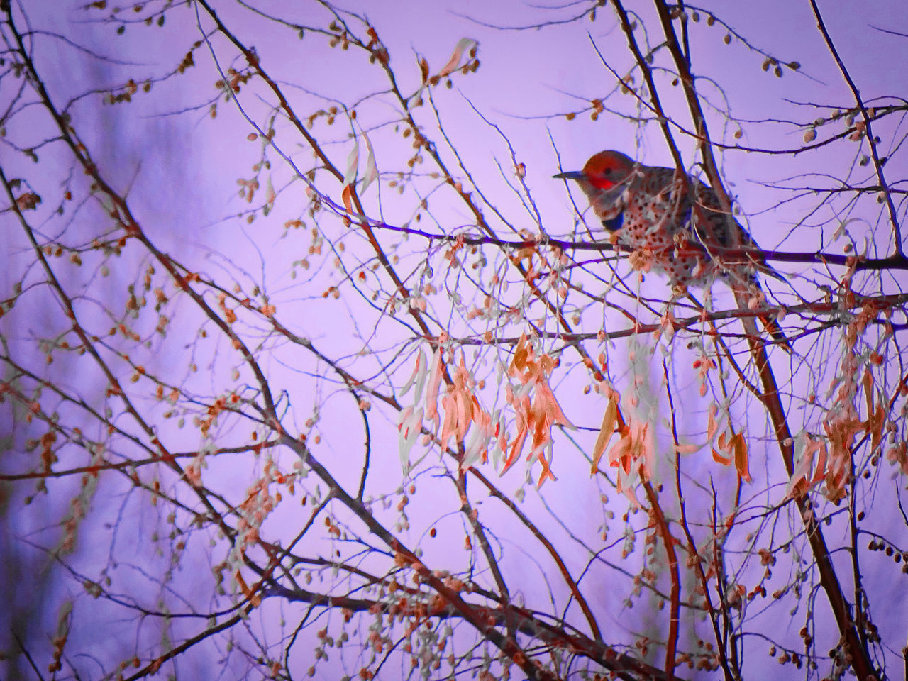 low angle view, one animal, animal themes, tree, branch, no people, outdoors, nature, animals in the wild, mammal, day, beauty in nature, sky, perching